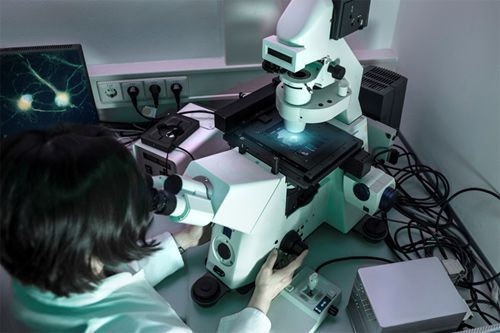 dentist viewing stem cells through a microscope